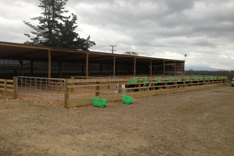 Calf Shed With Pens And Yorkshire Boarding
